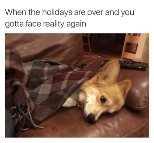tumblr post of sad dog after that holidays