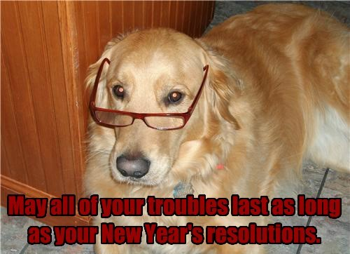 dogs new years resolutions caption funny - 8598777088