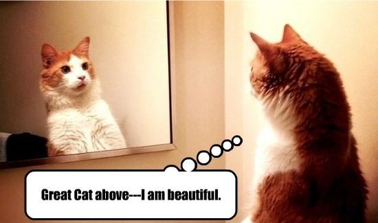 Great Cat above---I am beautiful.