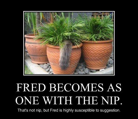 FRED BECOMES AS ONE WITH THE NIP.