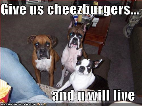 Cheezburger Image 859895040