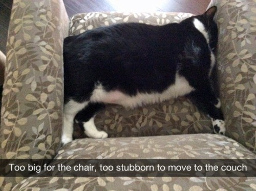 tumblr post of cat asleep on chair that is too small