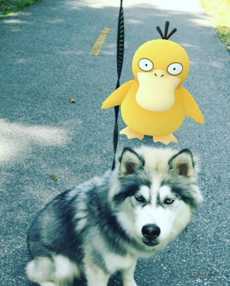 fun dogs Pokémon pokemon go walks - 859909