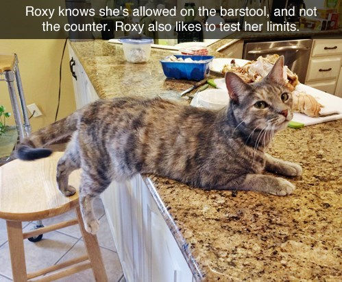tumblr post of cat testing limits by laying on counter