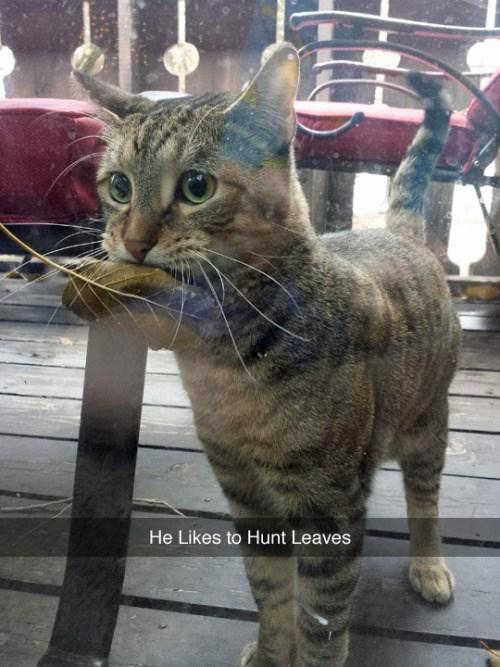 funny animal image of cat hunting leaf