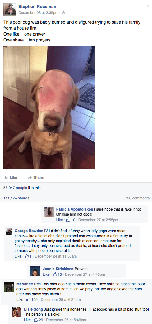 funny facebook troll pray for dog with ham face