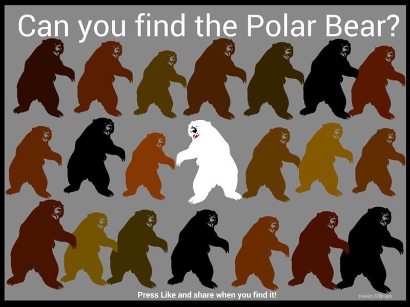 polar bears - 8599923200