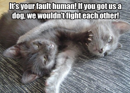 your christmas dogs fault fight caption Cats - 8600447488