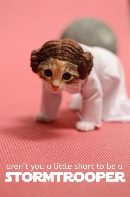 cute animal image of kitten as princess leia