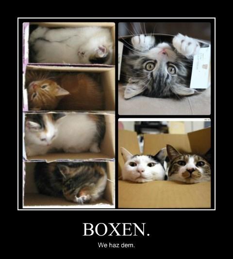 BOXEN.