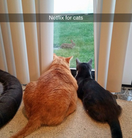 funny animal image of cats at window like netflix