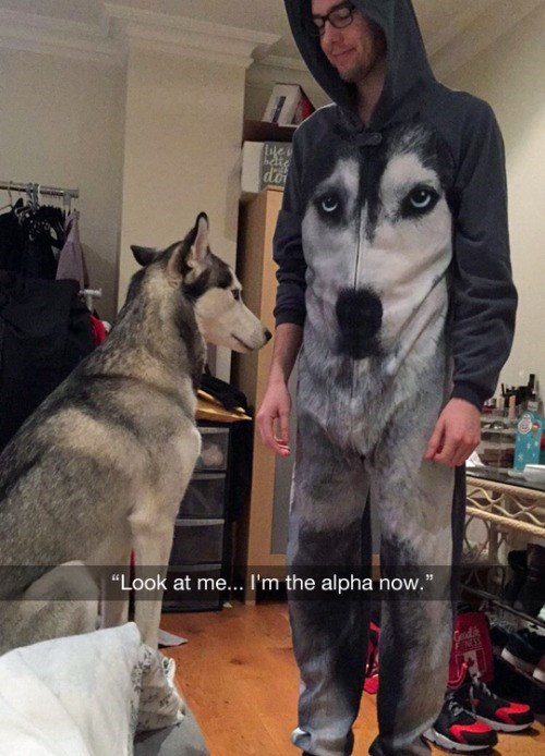 funny animal image of man wearing an outfit that looks like his dog