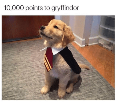 cute animal image of puppy dressed up like gryffindor