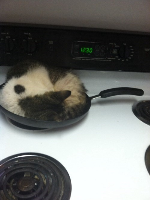 funny animal image of cat sleeping on stove