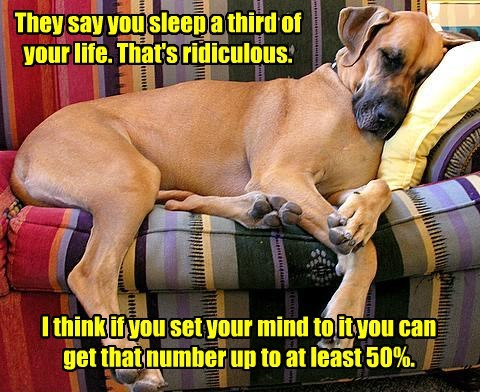 third dogs life number up 50% sleep caption - 8600908032