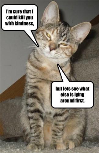 A Cat's Prerogative