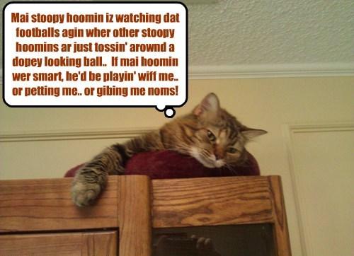 ignore football caption Cats funny - 8600930560