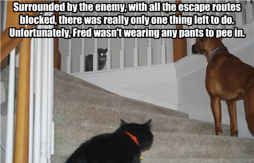 enemy dogs pants surrounded wearing caption - 8600969984