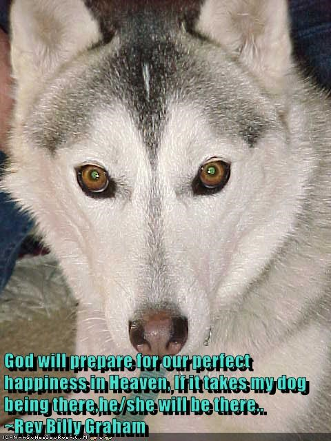 God will prepare for our perfect happiness in Heaven, If it takes my dog being there,he/she will be there..         ~Rev Billy Graham