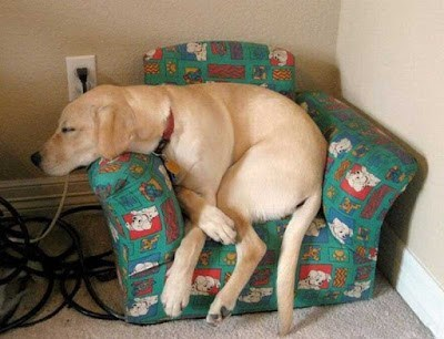 cute animal image of dog who is too big for chair