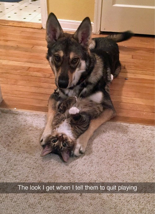 funny animal image of cat and dog playing together