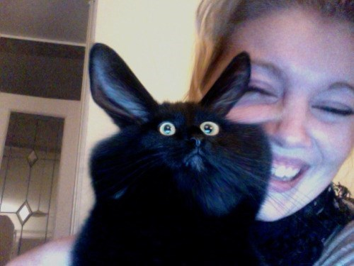 funny animal image of cat warped in photobooth