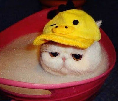 funny animal image of cat in a hat in a bath