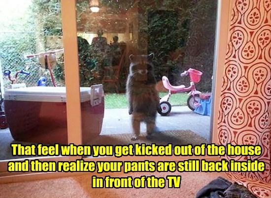 inside joke,pants,raccoon,outside,funny