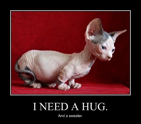 I Need A Hug Lolcats Lol Cat Memes Funny Cats Funny Cat