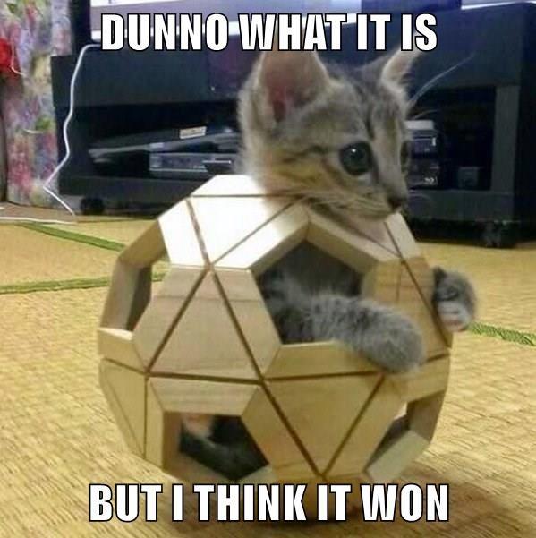 animals cat kitten - 8601746688