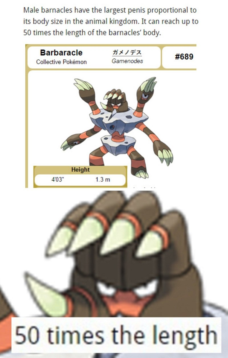 pokemon memes barbaracle dong