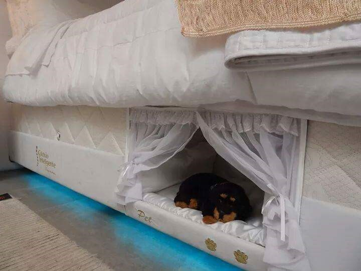 funny animal image of pet bed built into box spring of human bed