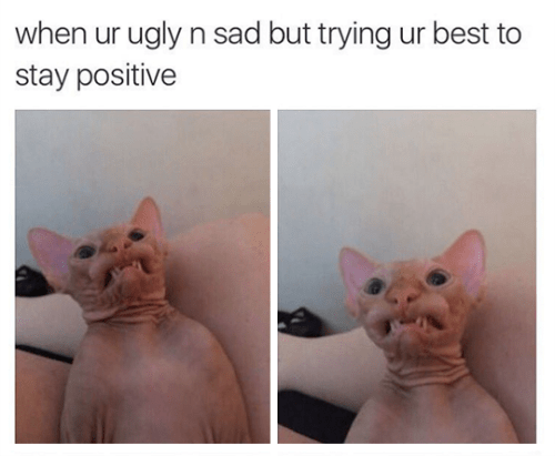 funny animal image of ugly hairless cat who stays positive