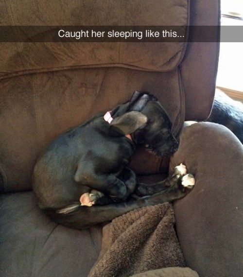 funny cute animal image of puppy asleep in awkward position