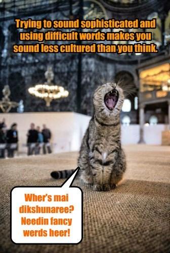 cat dictionary - 8601946624