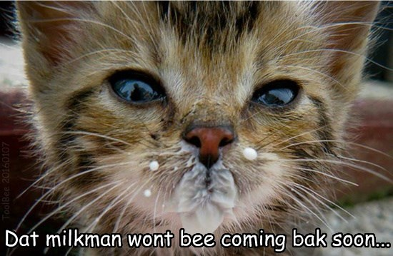 cat milk kitten milkman - 8602086656