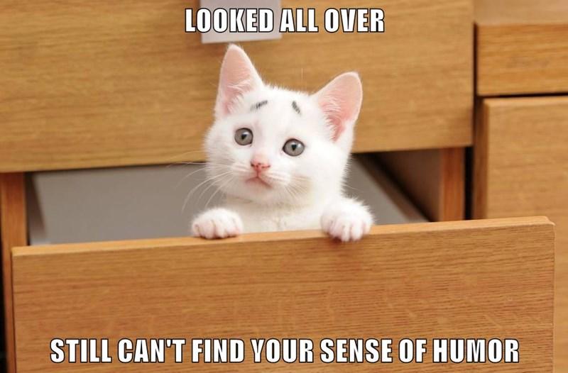 animals humor cat sense of humor - 8602098944