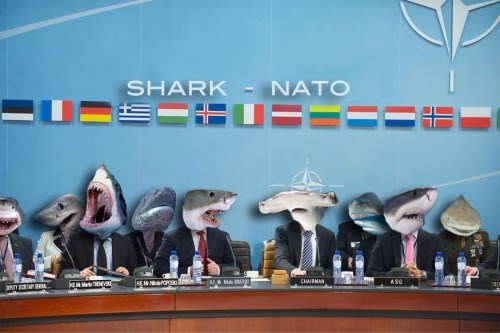 funny animal image of sharks as part of NATO