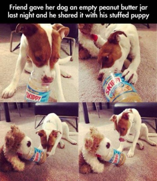 cute animal image of dog sharing peanut butter with stuffed dog