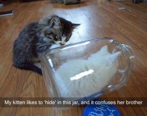 funny cute animal image of a kitten in a jar
