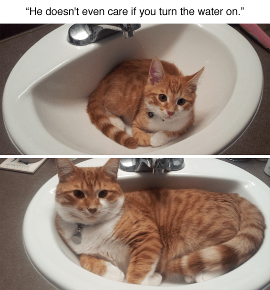 funny animal image of cat in sink