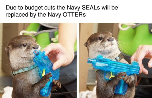 funny animal image of otter with water gun