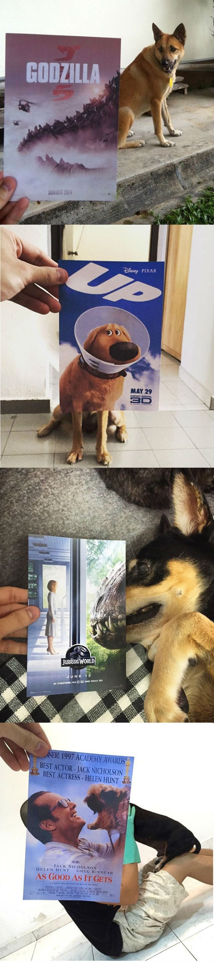 funny animal images of dogs with movie posters held over them