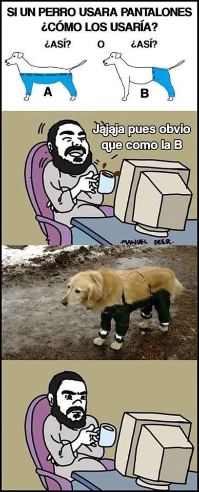 como lo usaria el perro
