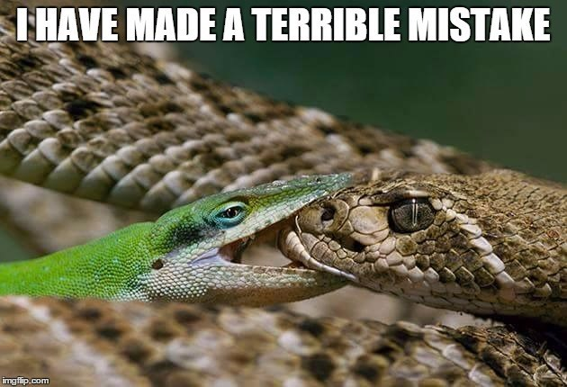 terrible mistake,lizard,snake