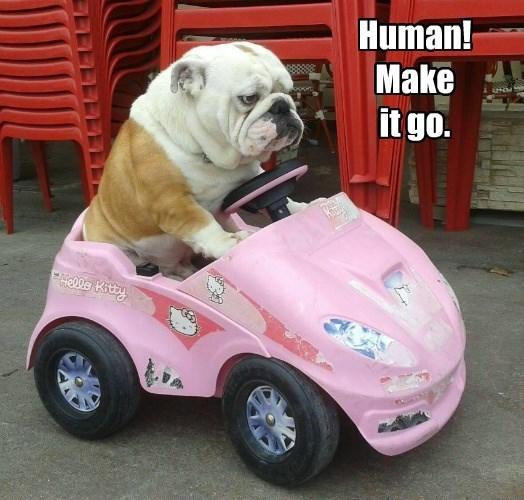 Human! Make it go.
