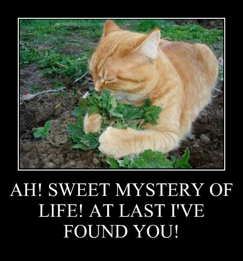 AH! SWEET MYSTERY OF LIFE! AT LAST I'VE FOUND YOU!