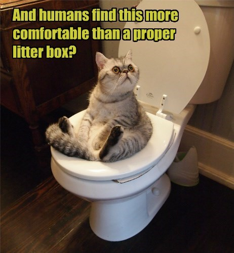 And humans find this more comfortable than a proper litter box?