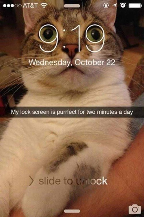 funny animal image of cat as background for iphone