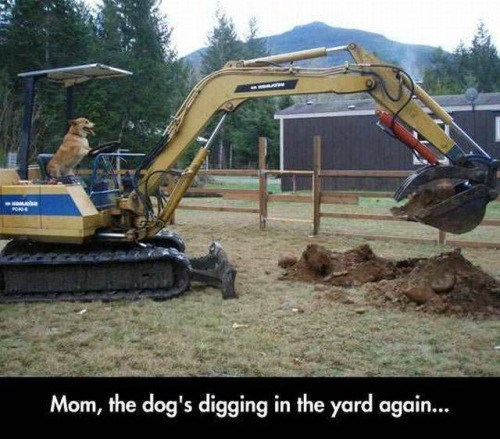 funny animal image of dog in excavator